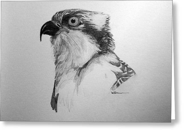 Osprey Drawings Greeting Cards - Sketch of an Osprey Greeting Card by Leslie M Browning