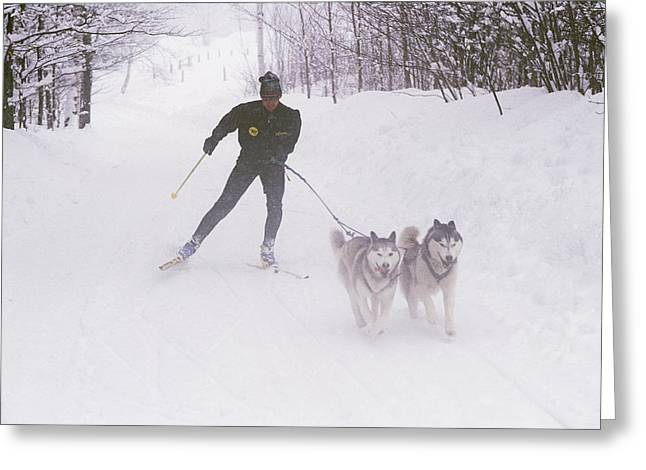 Sporting Goods Greeting Cards - Skijoring In Maine. Model Released Greeting Card by Bill Curtsinger