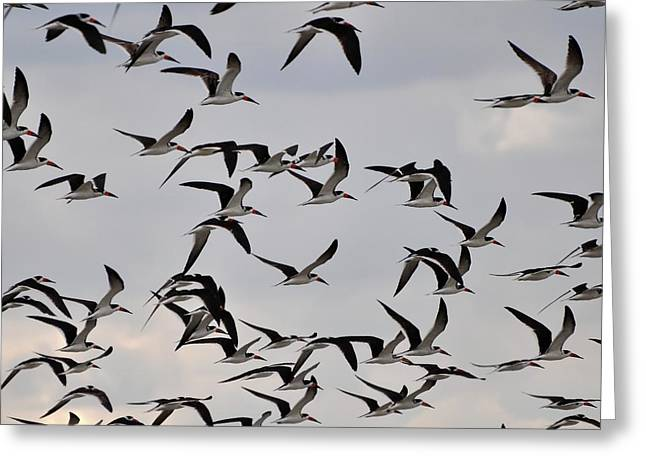 Al Powell Photography Usa Greeting Cards - Skimmer Sky Greeting Card by Al Powell Photography USA