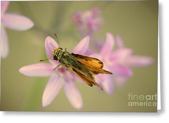Skipper Butterfly Greeting Card by Brooke Roby