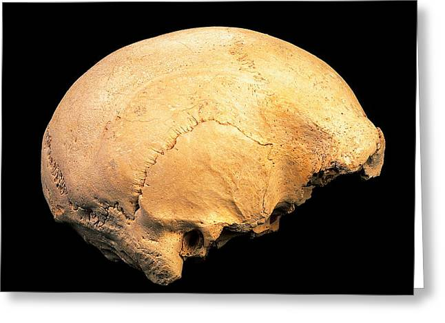 Skull 4, Sima De Los Huesos Greeting Card by Javier Truebamsf