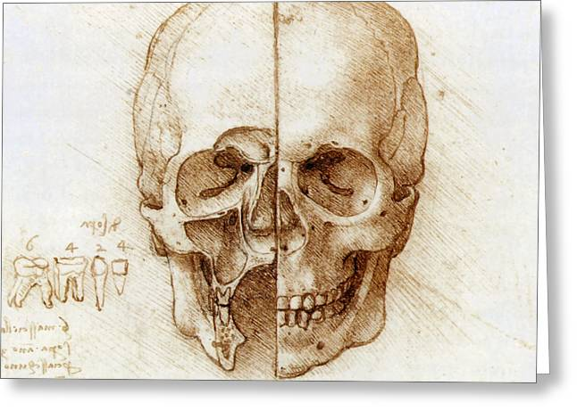 Ethmoid Bone Greeting Cards - Skull Anatomy By Leonardo Da Vinci Greeting Card by Sheila Terry