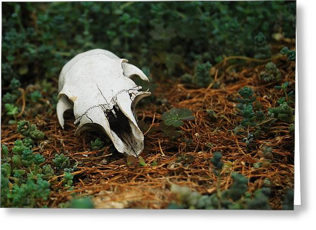 Belle Isle Greeting Cards - Skull Greeting Card by Michael Peychich