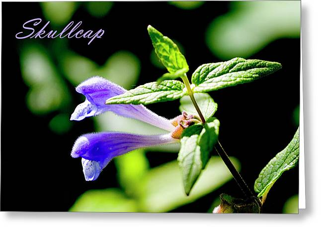 Skullcap Greeting Cards - Skullcap Greeting Card by Allan MacDonald