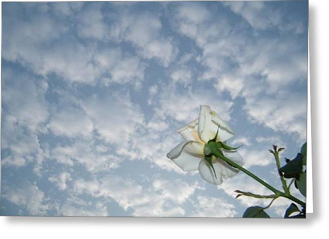 Prashant Ambastha Greeting Cards - Sky Rose Greeting Card by Prashant Ambastha