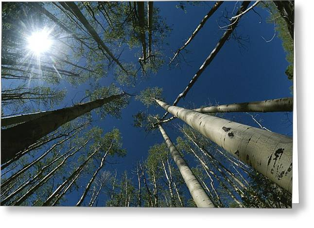 Sangre De Cristo Greeting Cards - Skyward View Of A Sunburst Greeting Card by Raul Touzon