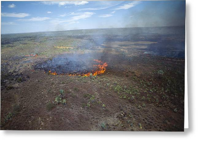 Slash And Burn Agriculture Greeting Card by Alexis Rosenfeld