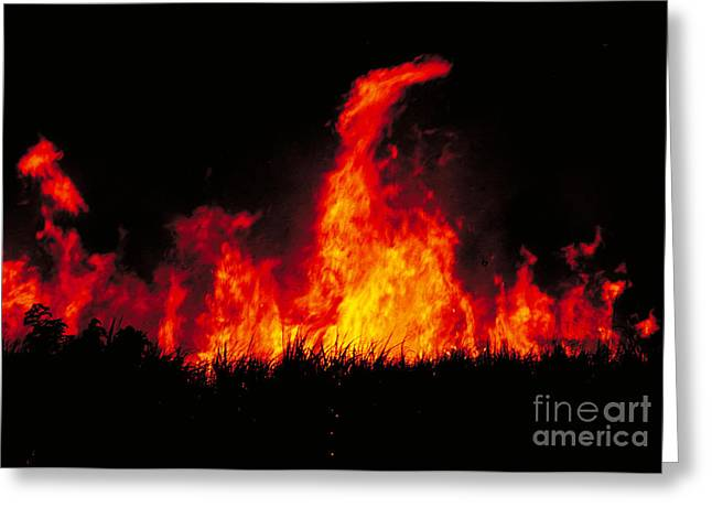 Concern Greeting Cards - Slash And Burn Agriculture Greeting Card by Dante Fenolio