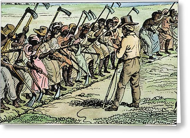 Farmers Field Greeting Cards - Slavery: Hoeing Greeting Card by Granger