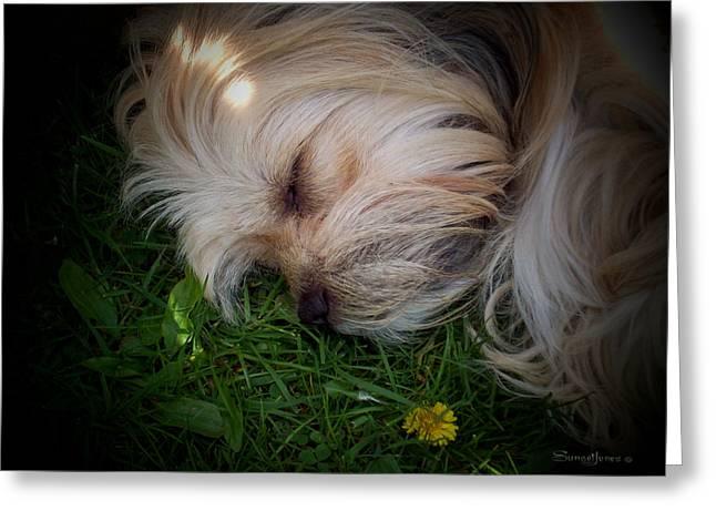 Puppies Digital Art Greeting Cards - Sleeping Beauty Greeting Card by Robert Orinski