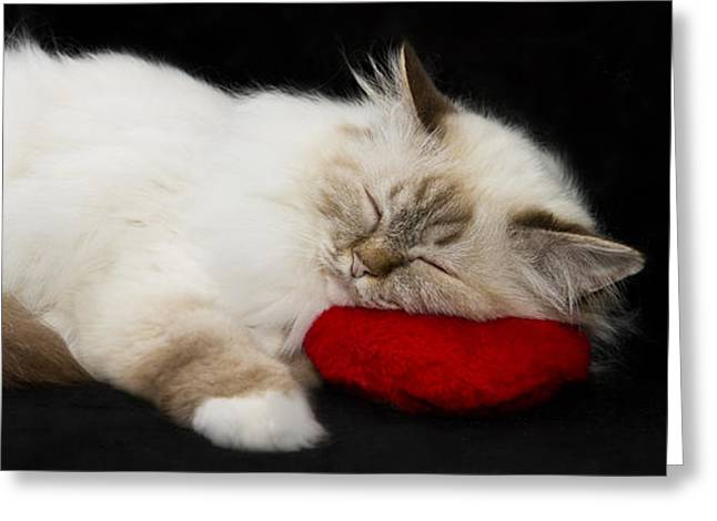 Familiar Greeting Cards - Sleeping Birman Greeting Card by Melanie Viola