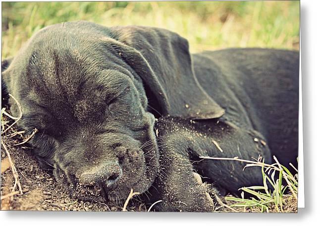 Mixed Labrador Retriever Greeting Cards - Sleeping Boris Greeting Card by Janaye Book