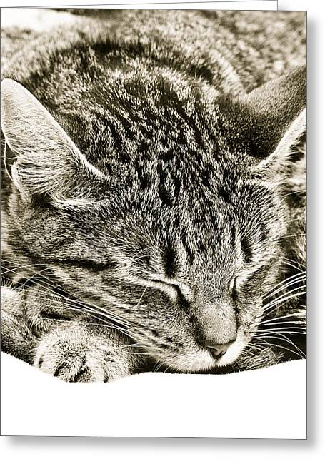 Critters Greeting Cards - Sleeping cat Greeting Card by Tom Gowanlock