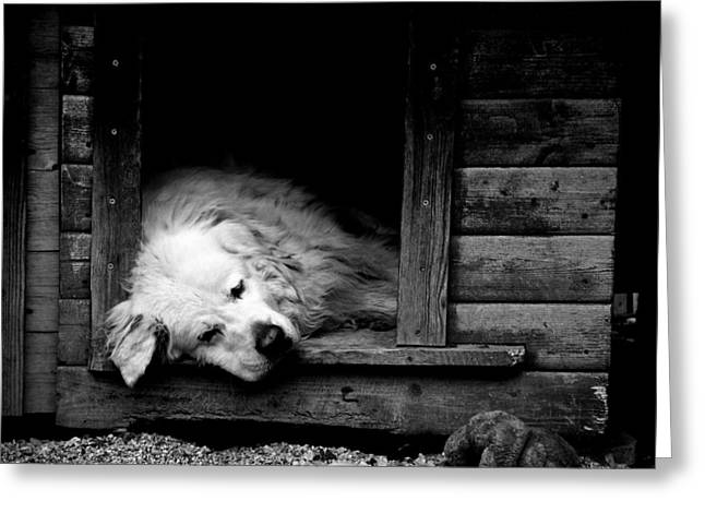 Doghouse Greeting Cards - Sleeping Greeting Card by Laura Melis