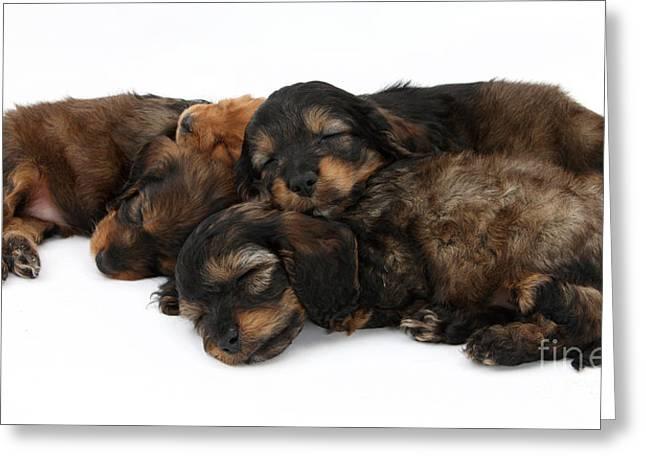 Sleeping Baby Animal Greeting Cards - Sleeping Puppies Greeting Card by Mark Taylor