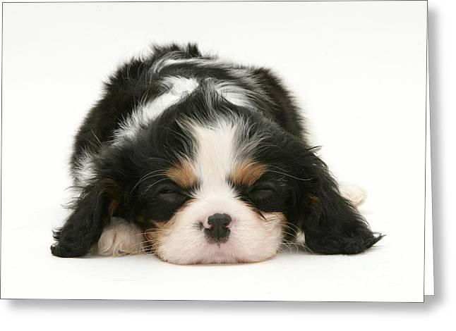 Sleeping Puppy Greeting Card by Jane Burton