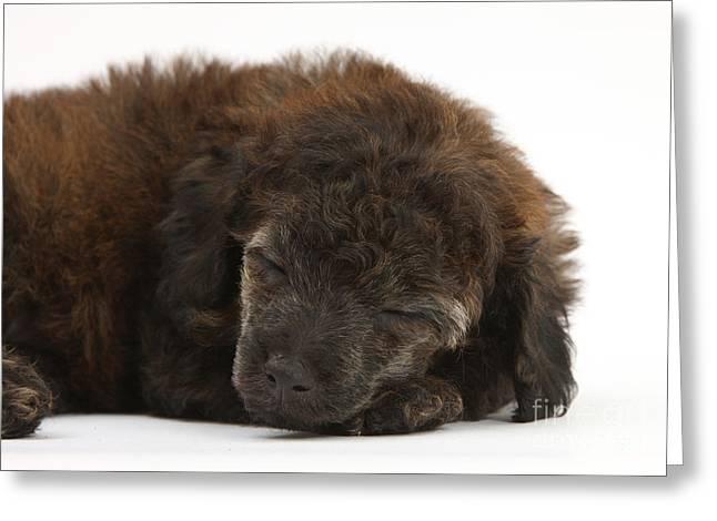 Sleeping Baby Animal Greeting Cards - Sleeping Puppy Greeting Card by Mark Taylor