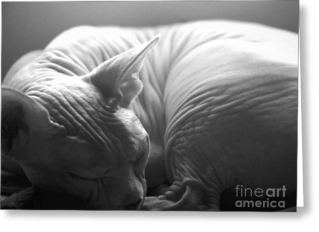 Sphynx Cat Portrait Greeting Cards - Sleeping Sphynx in Black and White Greeting Card by Glennis Siverson