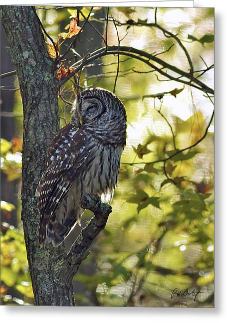 Lowcountry Greeting Cards - Sleepy Barred Owl Greeting Card by Phill  Doherty