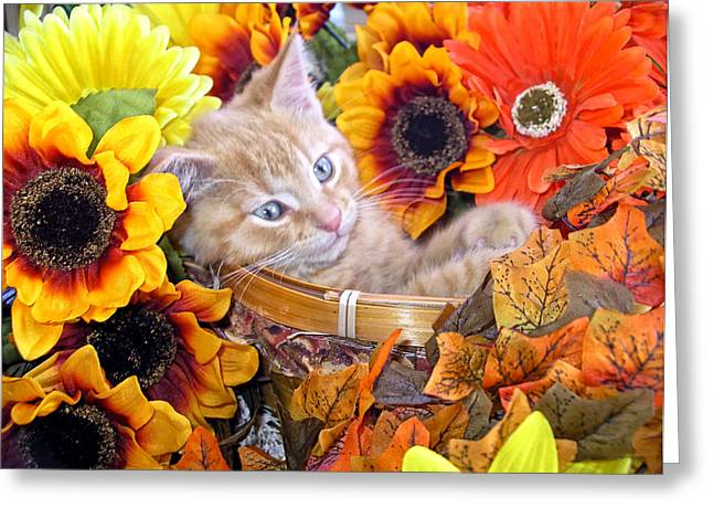 Kitteh Greeting Cards - Sleepy Kitty Cat in a Fall Flower Basket with Gerbera Daisies and Autumn Sunflowers Looking Out Greeting Card by Chantal PhotoPix