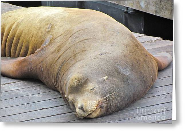 Recently Sold -  - California Sea Lions Greeting Cards - Sleepy Sea Lion Greeting Card by Beth Saffer