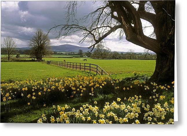 Garden Statuary Greeting Cards - Slievenamon, Ardsallagh, Co Tipperary Greeting Card by The Irish Image Collection