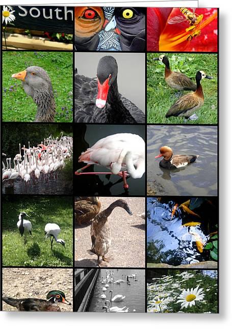 Roberto Alamino Greeting Cards - Slimbridge Wetlands Center Greeting Card by Roberto Alamino