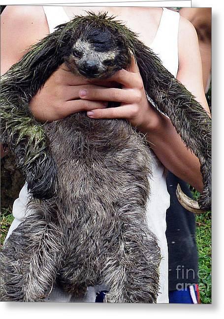 Sloth Digital Greeting Cards - Sloth Greeting Card by Vicky Tarcau