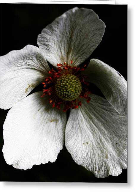 Landscape Framed Prints Greeting Cards - Slouching Seed Greeting Card by Jerry Cordeiro