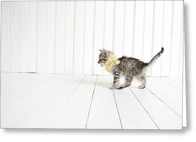 Kitten Greeting Cards - Small Greeting Card by Amy Tyler