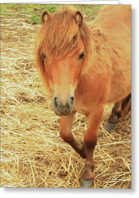 Copper Colored Greeting Cards - Small Horse Large Beauty Greeting Card by Karol  Livote