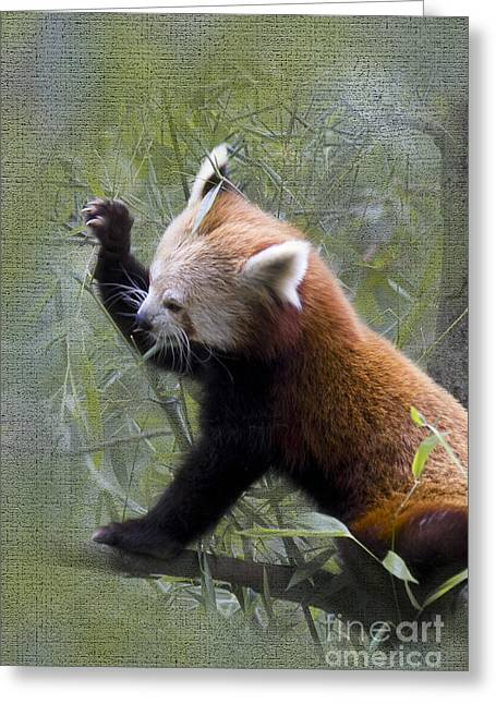 Chinese Portrait Greeting Cards - Small Panda Greeting Card by Heiko Koehrer-Wagner