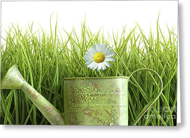 Ground Greeting Cards - Small watering can with tall grass against white Greeting Card by Sandra Cunningham