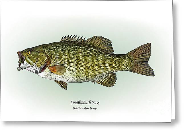 Bass Drawings Greeting Cards - Smallmouth Bass Greeting Card by Ralph Martens