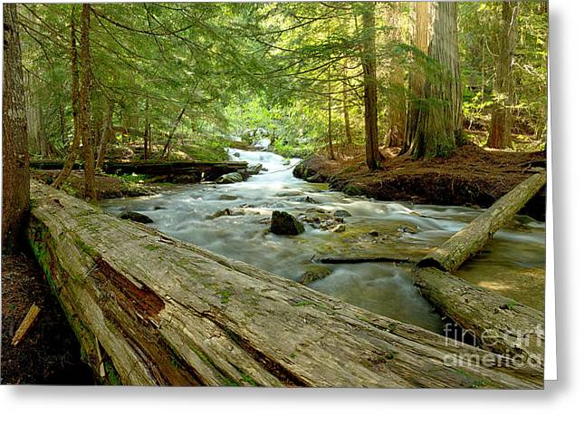 Cedar Creek Greeting Cards - Smell of Cedars Greeting Card by Reflective Moment Photography And Digital Art Images