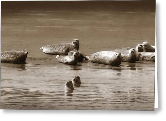 Sea Lions Greeting Cards - Smile Pretty For The Camera Greeting Card by Donna Blackhall