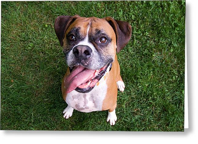 Fawn Boxer Greeting Cards - Smiling Boxer Dog Greeting Card by Stephanie McDowell