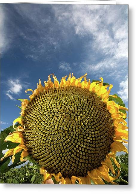 Clouds Prints Greeting Cards - Smiling Face Greeting Card by Peter Tellone