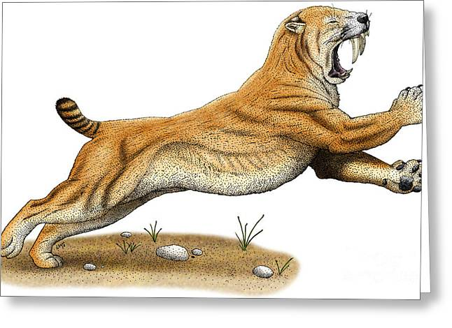 Saber Greeting Cards - Smilodon Greeting Card by Roger Hall and Photo Researchers