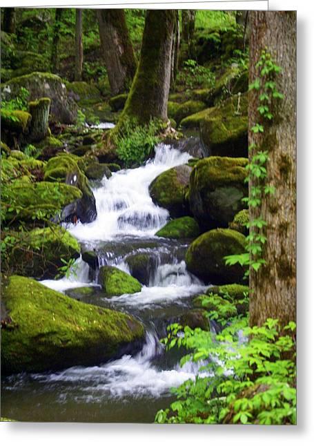 Great Smokey Mountains Greeting Cards - Smokey Mountain Stream Greeting Card by Marty Koch