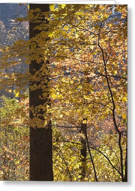 Fall Photos Greeting Cards - Smokies Autumn Greeting Card by Andrew Soundarajan