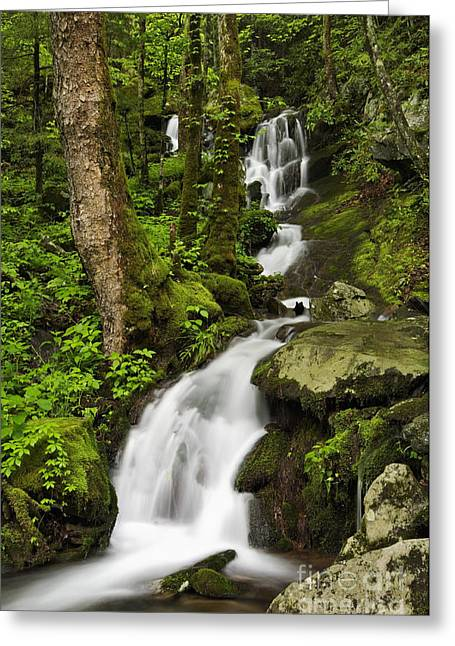 Runoff Greeting Cards - Smoky Mountain Cascade - D002388 Greeting Card by Daniel Dempster