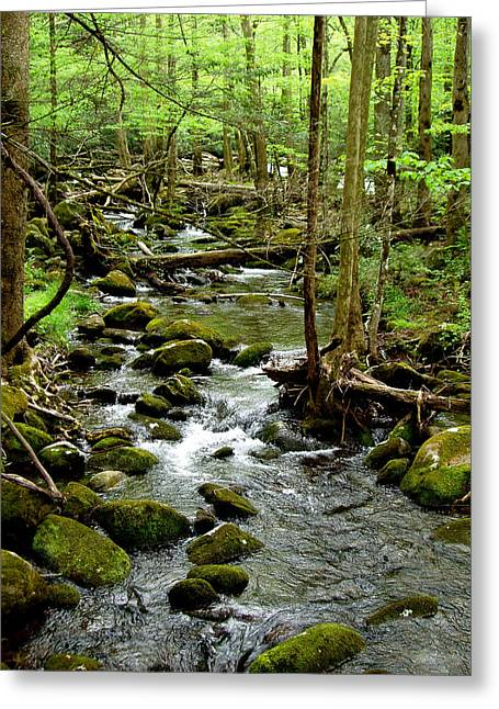 Tennessee River Greeting Cards - Smoky Mountain Stream 2 Greeting Card by Nancy Mueller
