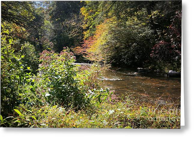 Tennessee River Greeting Cards - Smoky Mountain Sunshine Greeting Card by Carol Groenen