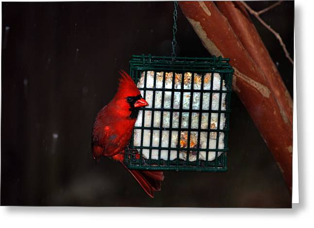 Back Yard Birds Greeting Cards - Snack Before The Storm Greeting Card by Skip Willits
