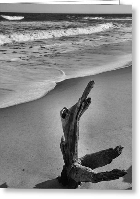 Snag And Surf Greeting Card by Steven Ainsworth