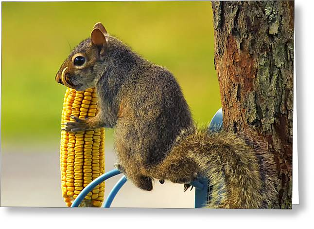 Snaggletooth Squirrel With Corn Greeting Card by Bill Tiepelman