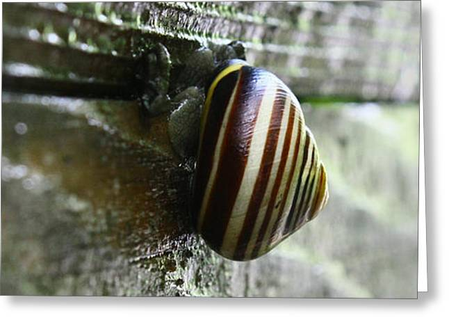 Snail Greeting Card by Photography Art