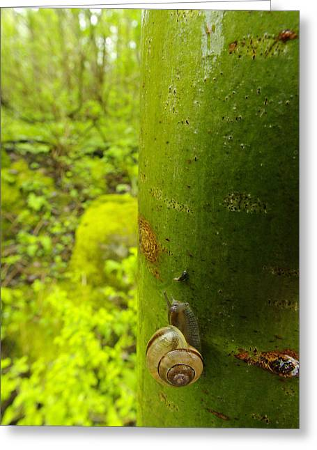 Clinging Greeting Cards - Snail, Pointe-des-cascades, Quebec Greeting Card by Steeve Marcoux