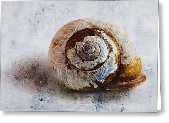Shell Texture Greeting Cards - Snail Shell Greeting Card by Ron Jones